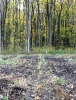 Сумське лісове господарство_48