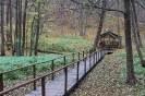 Сумське лісове господарство_50