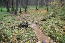 Сумське лісове господарство_55